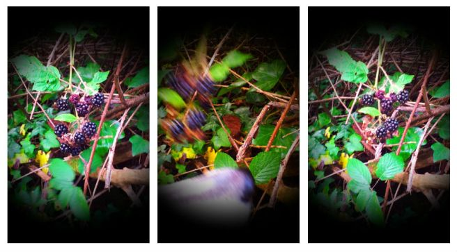 I was just trying to take a photo of these when a dog swooped in a stole three of them in a movie-monster blur.